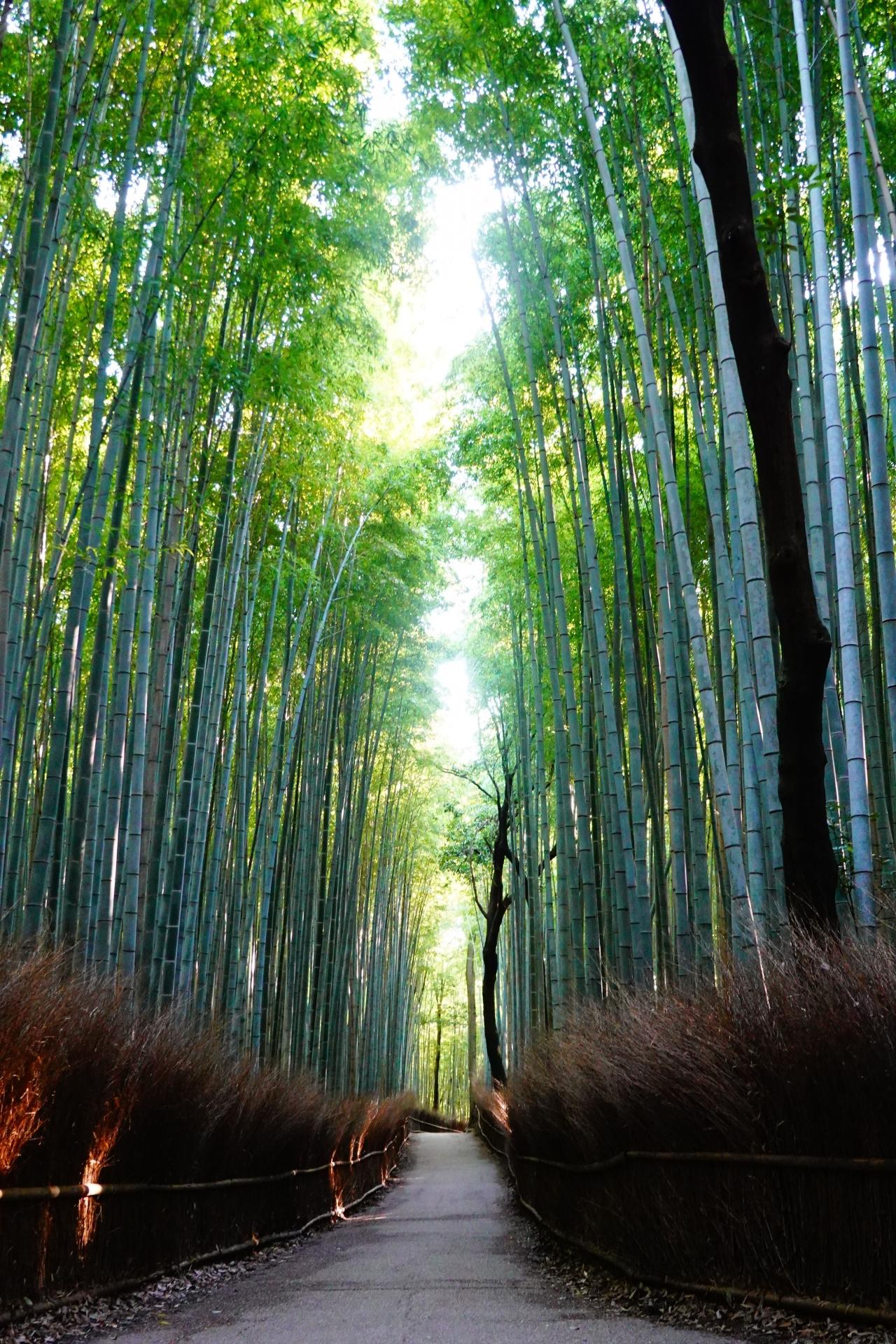 竹などの繊維と西陣カーボン